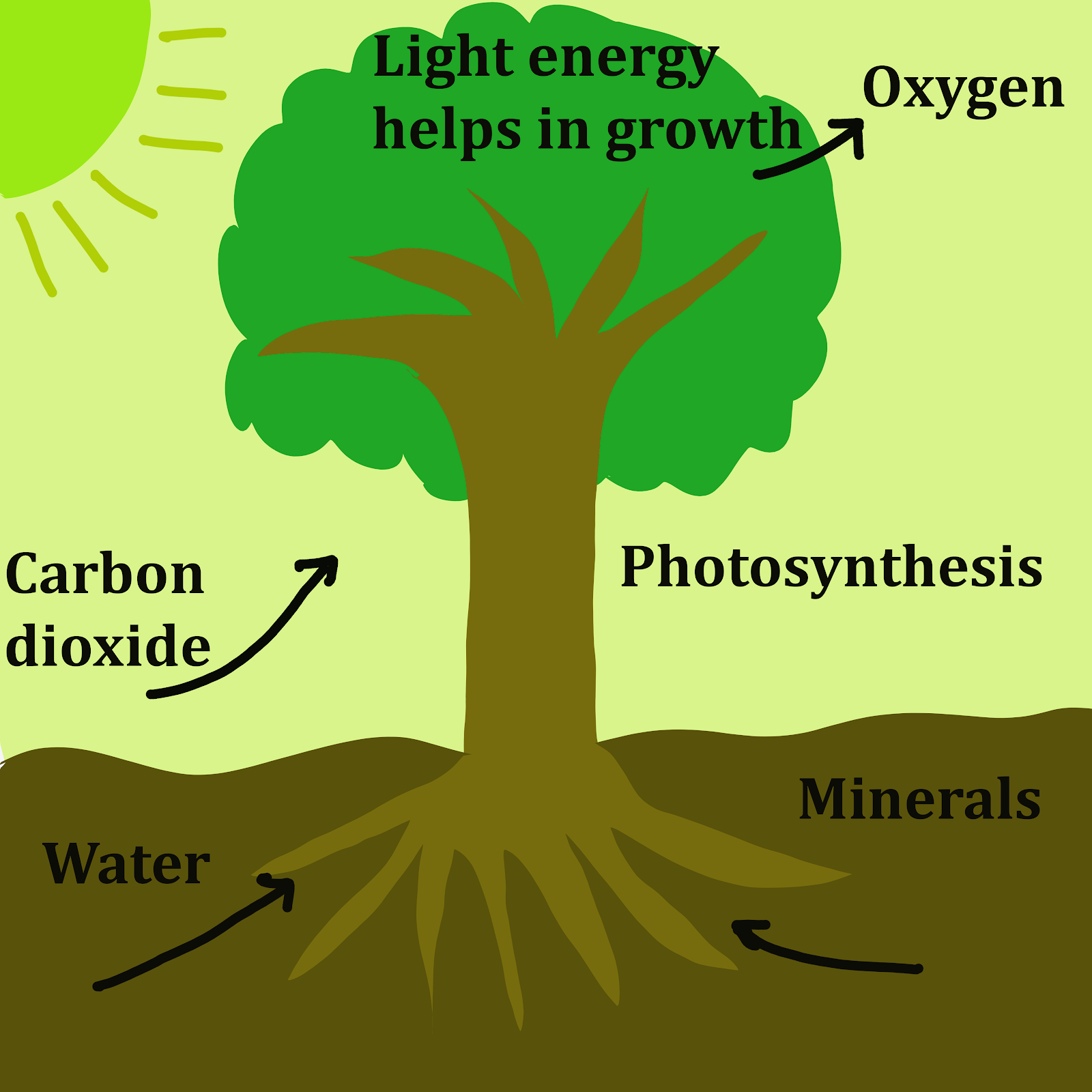 biotic factors affecting plant growth