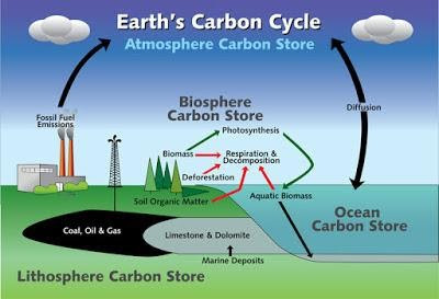 Earth Carbon Cycle
