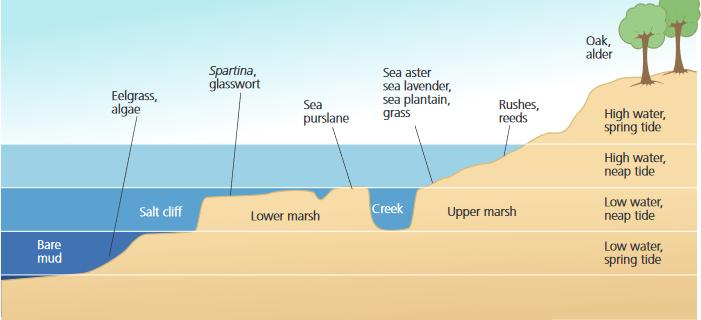 Estuarine environments