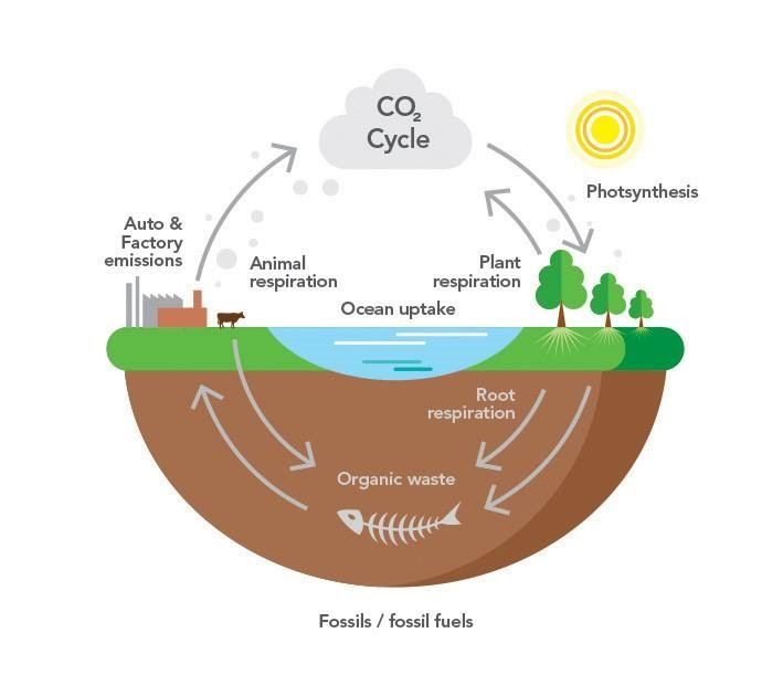 The Carbon and Water cycles