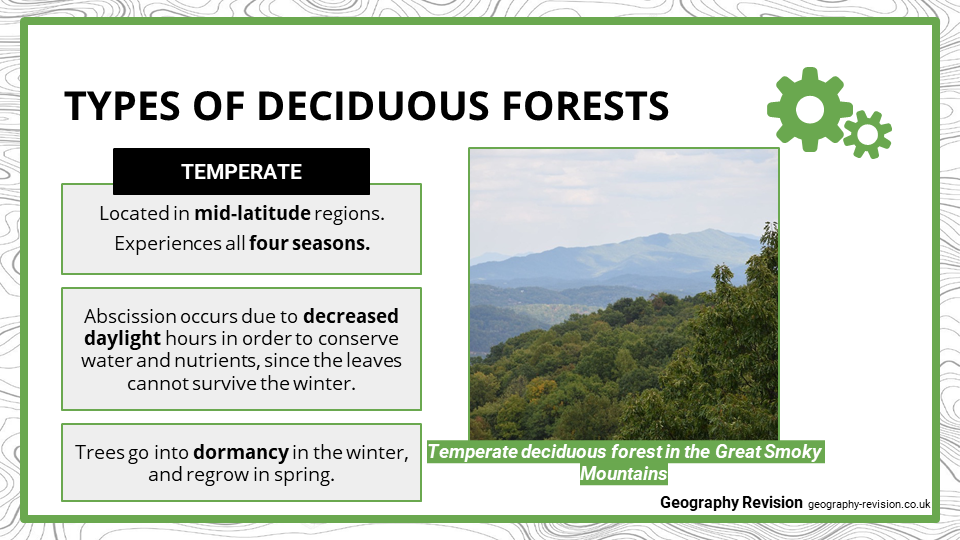 Deciduous Forests - Presentation 2