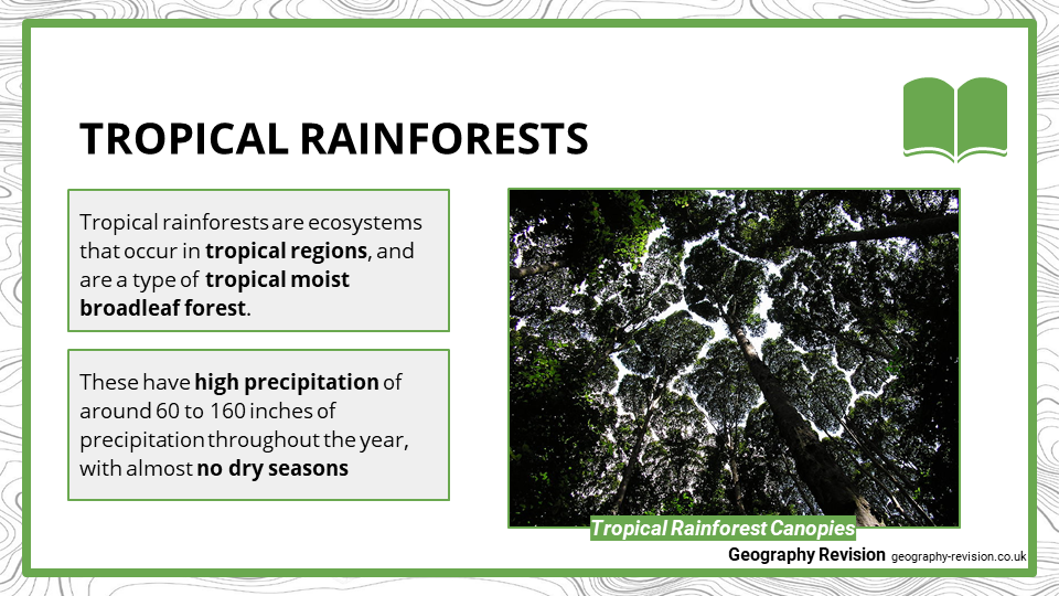 Tropical Rainforest - Presentation 1