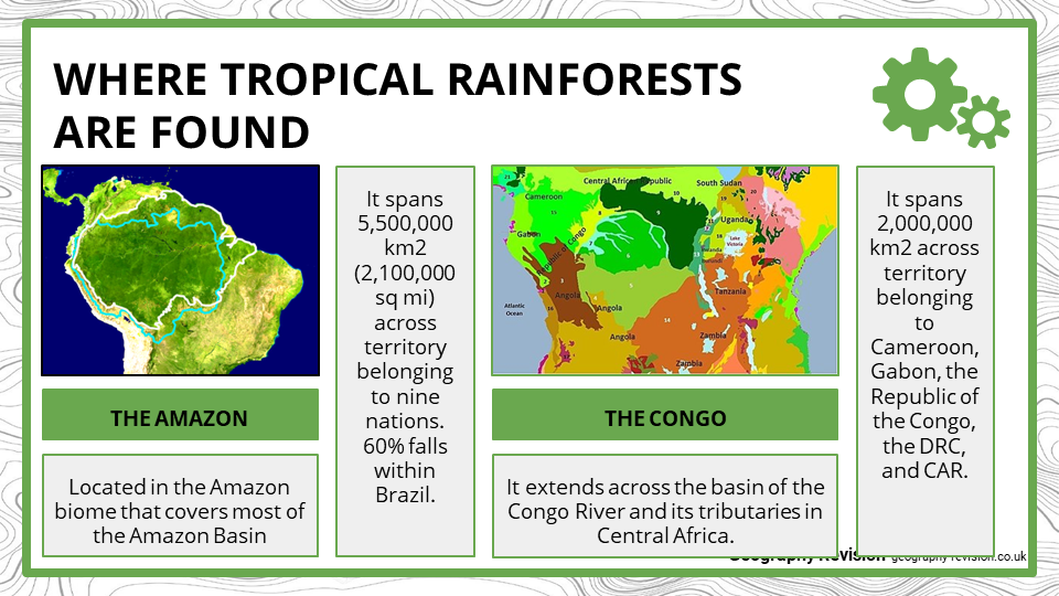 Tropical Rainforest - Presentation 2