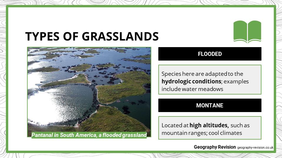 Grasslands - Presentation 2